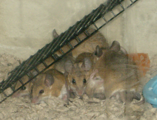 Mice huddled under their ladder