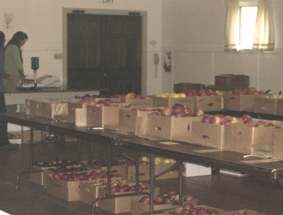 Dozens of apples waiting for homes