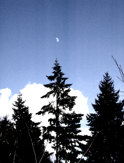 the moon above the trees