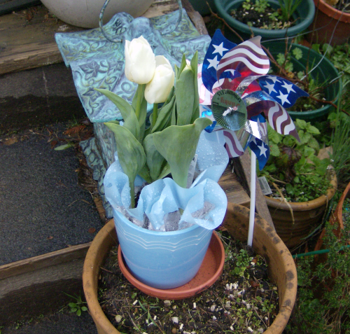 white tulips in a blue planter, a bright spot in my garden on a gray day