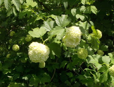 a snowball in may