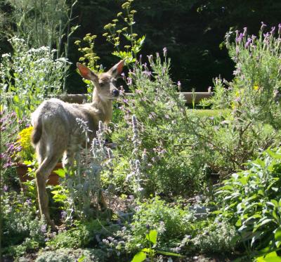 and the resident garden helper?