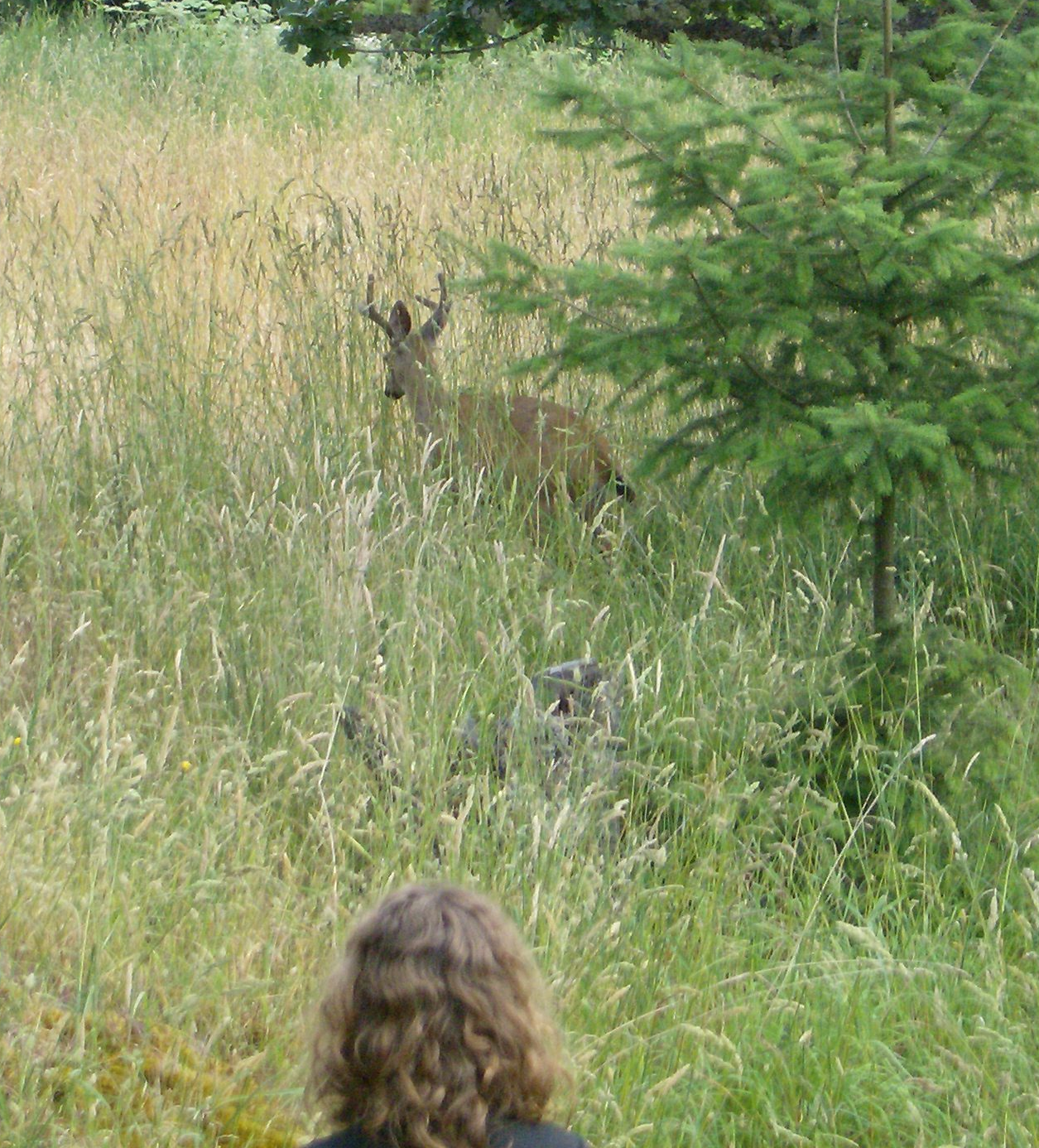 a three point buck in jills back yard with stidkid not 20 ft away
