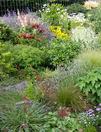 A part of Jillibus\' lovely english-style garden