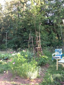 bean trellises with side view of chairs with cushions