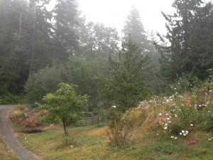 August morning mist