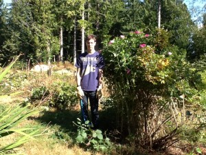 grant next to the rugosa when it was fully clipped - he is 6 feet tall, it is barely taller than him