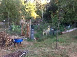 garden entry corner, with a blue wheelbarrow in front and the remainder of the roll of fencing waiting to be removed