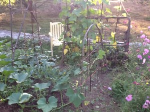a living trellis of willow now free from peas, beans growing an old bed frame and a rampant squash in the foreground