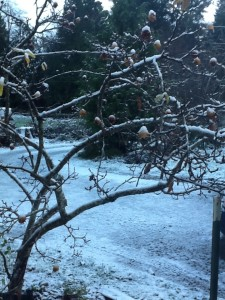 A dusting of snow on the driveway, seen through the bare medlar branches