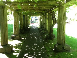 Looking down the long pergola, covered with old (and productive) grapes.