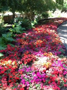 Masses of impatiens in the borders at the Filberg gardens.